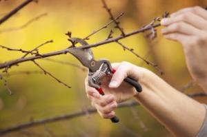 pruning_adamr